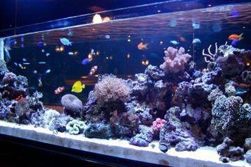 高級クラブに大型珊瑚水槽!