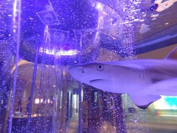 東京のオフィスに大型サメ水槽