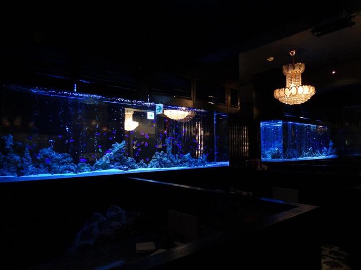 海水魚水槽  設置業者 横浜