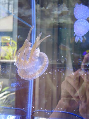 映画クラゲ姫 (海月姫) 水槽