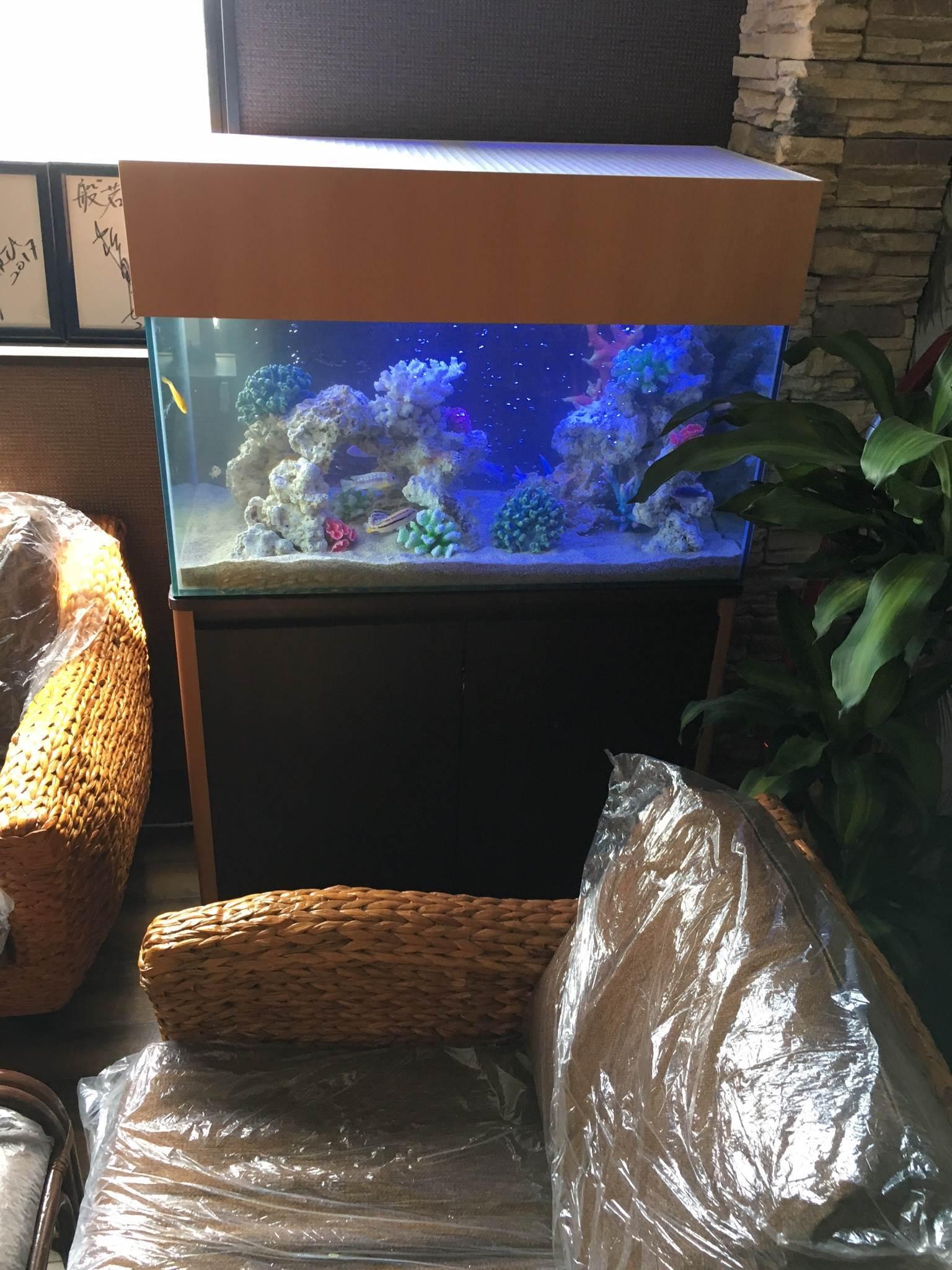 海水風淡水魚水槽