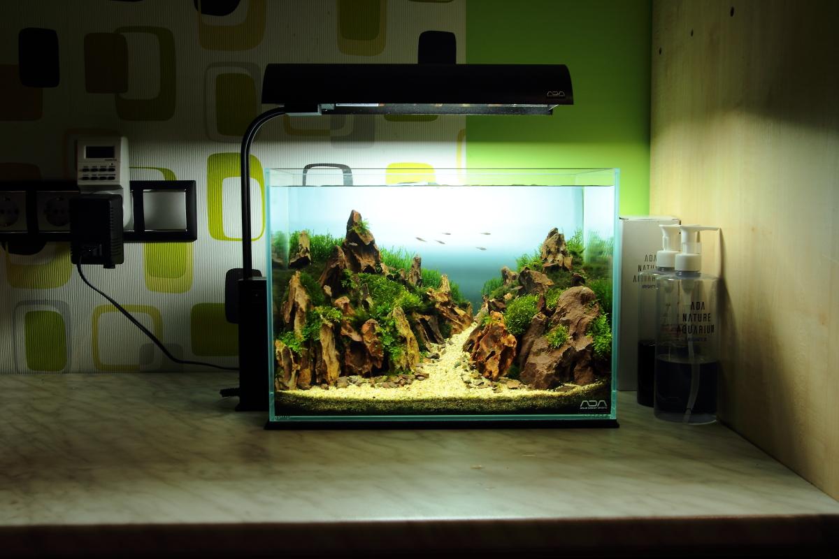 カフェに水槽レンタル