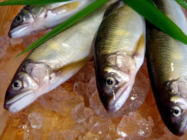 新年の魚と水槽空間