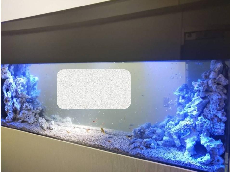 水槽を幻想的に照らすスポットライト