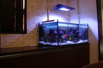 海水魚水槽  レンタル 横浜