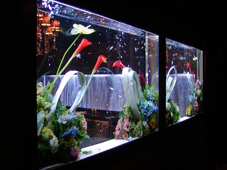 花と魚のコラボレーション